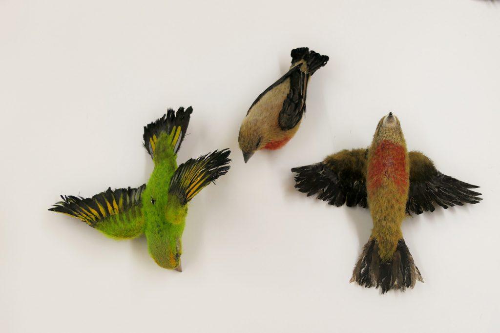 3D gedruckte Vögel